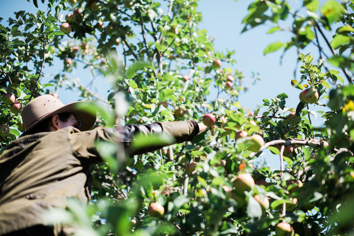 hannahpuechmarin-travelphotography-tenterfield-applepicking-2.jpg