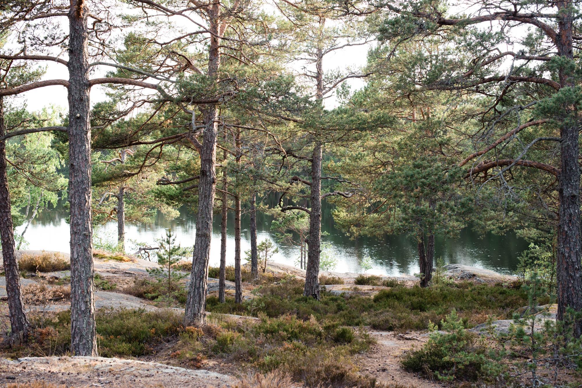Web-hannah puechmarin-sweden-9155.jpg