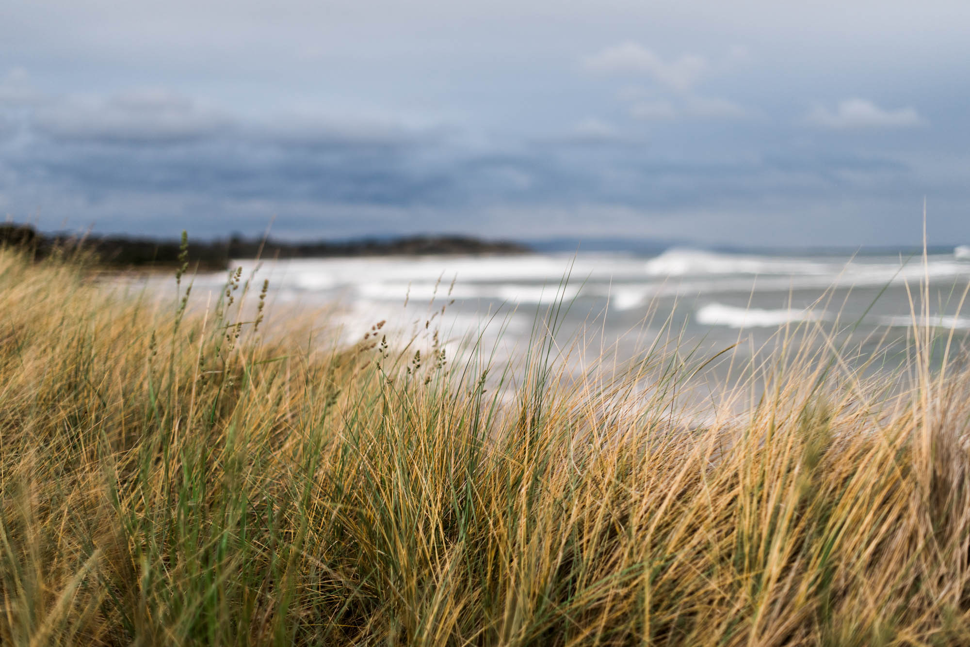 WEB-hannah puechmarin-tasmania photographer-8261.jpg