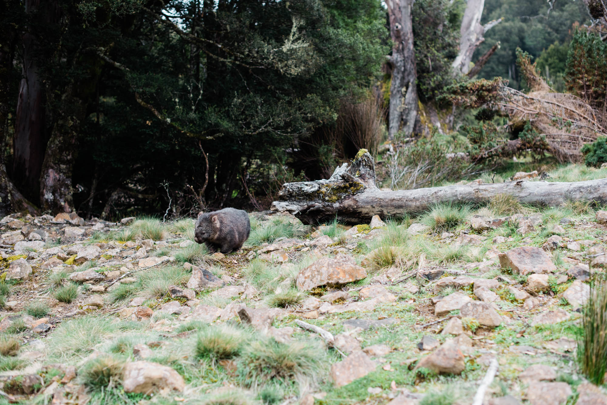 WEB-hannah puechmarin-tasmania photographer-9208.jpg
