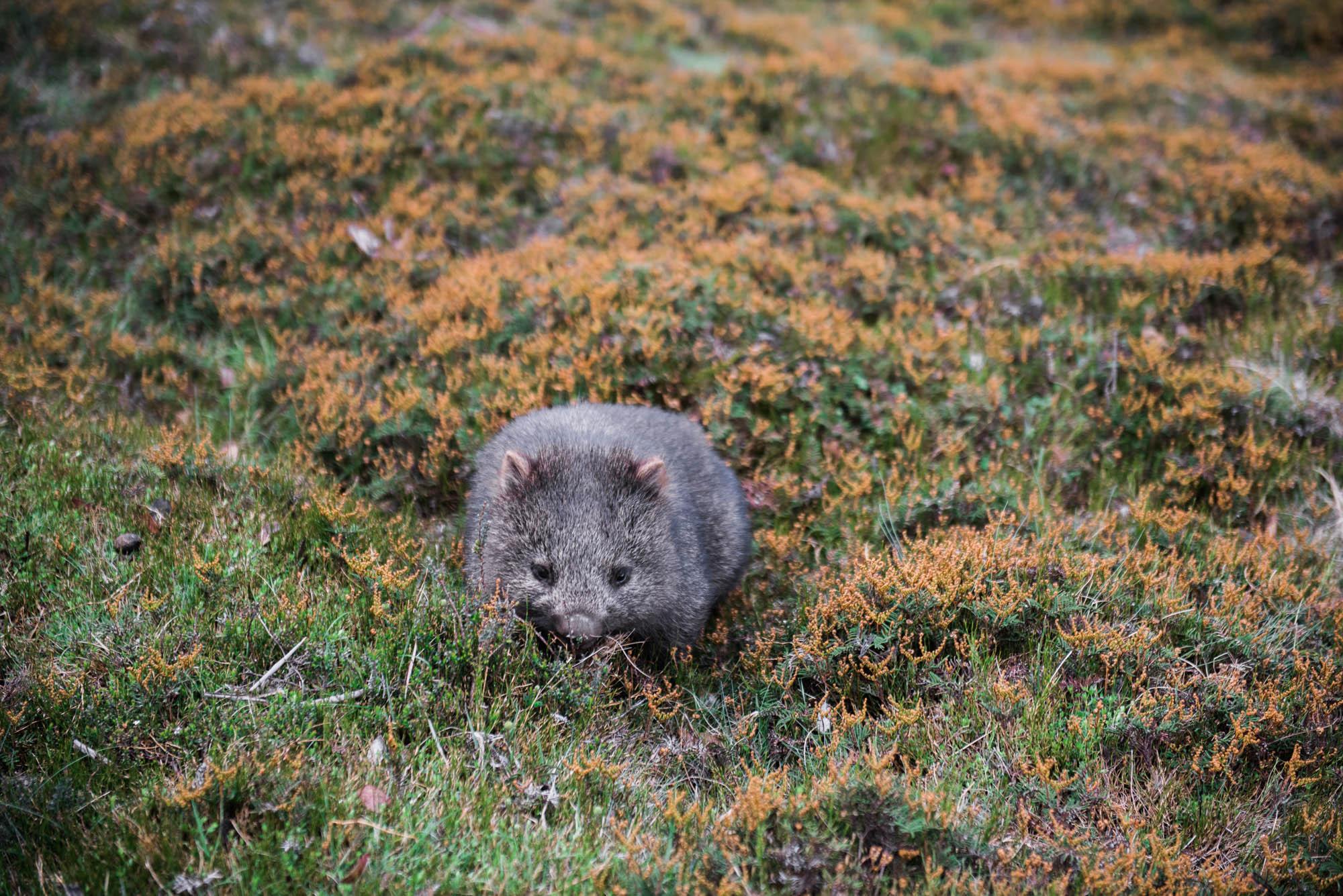 WEB-hannah puechmarin-tasmania photographer-9383.jpg