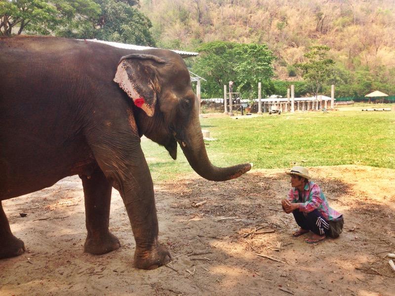 Mah Jan Peng with her mahout