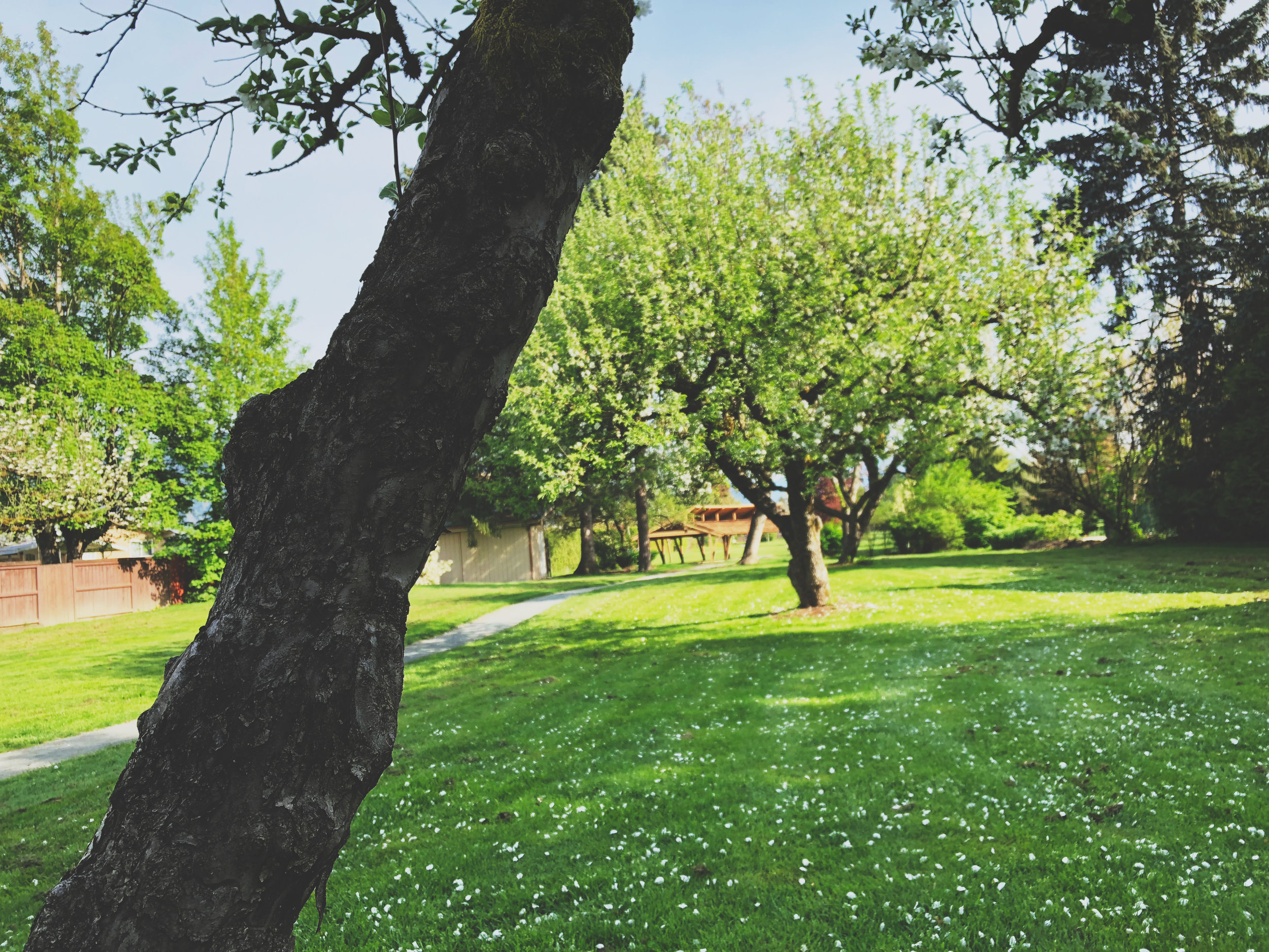 Gwynne Vaughan Park