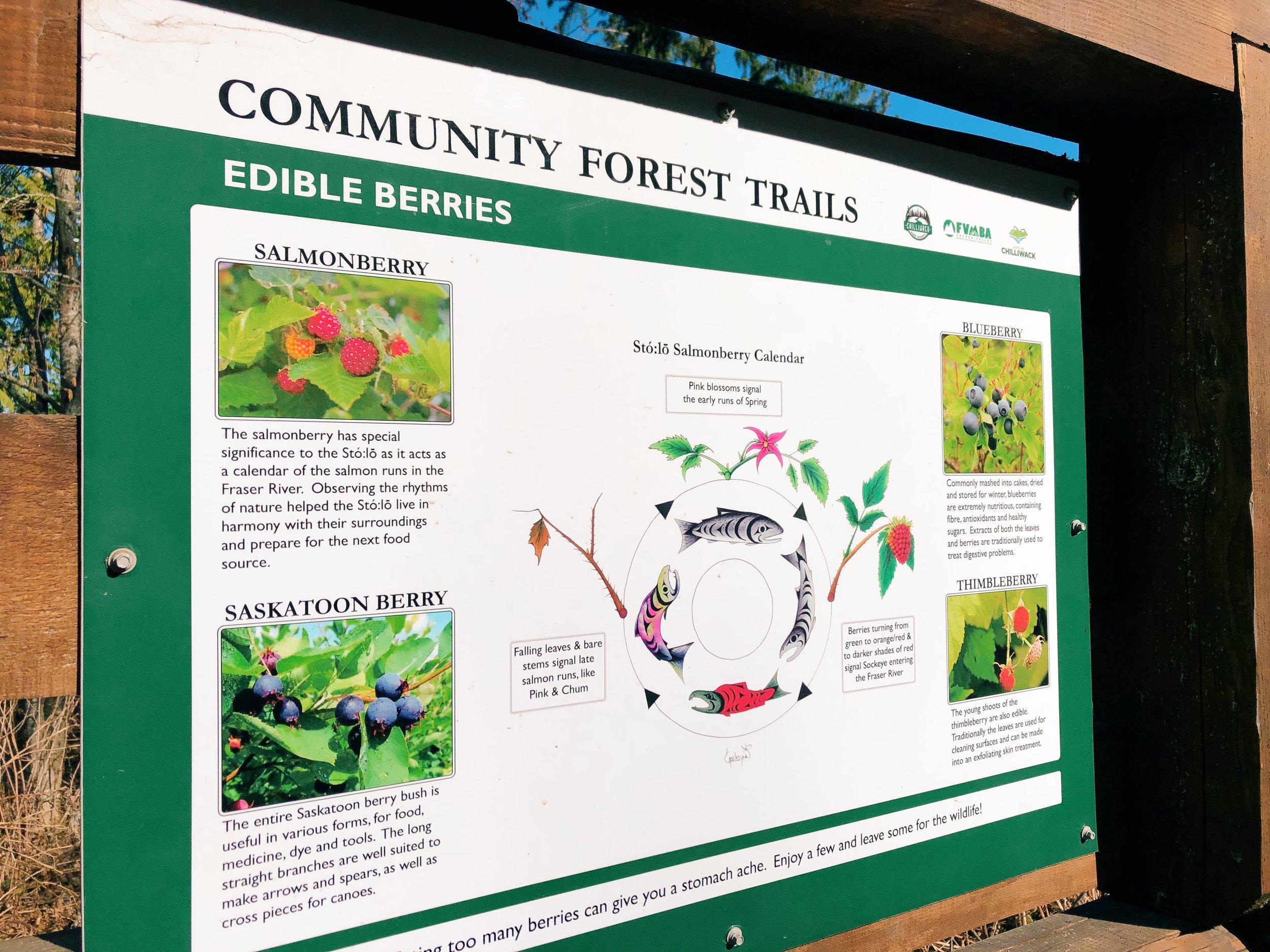Chilliwack Community Forest_3.jpg