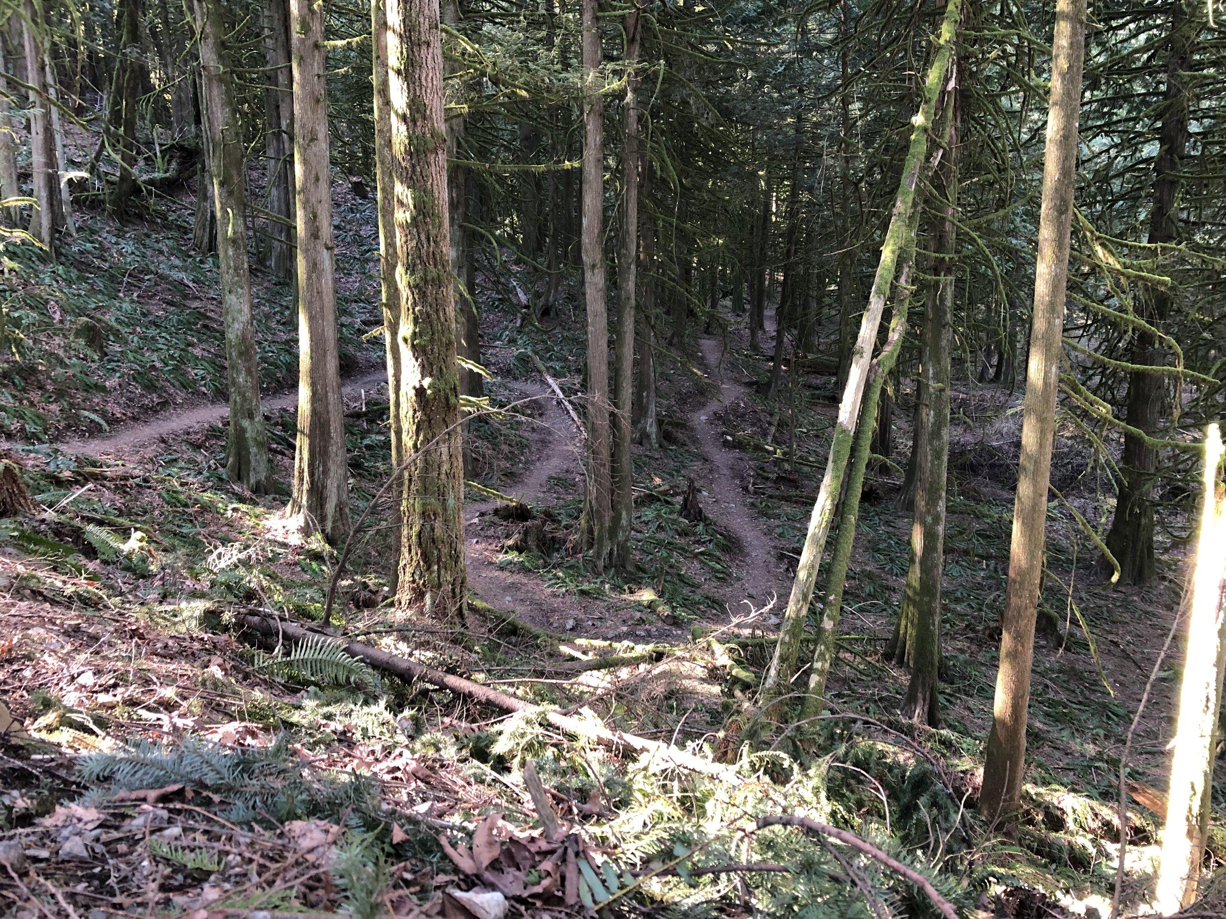Chilliwack Community Forest_5.jpg
