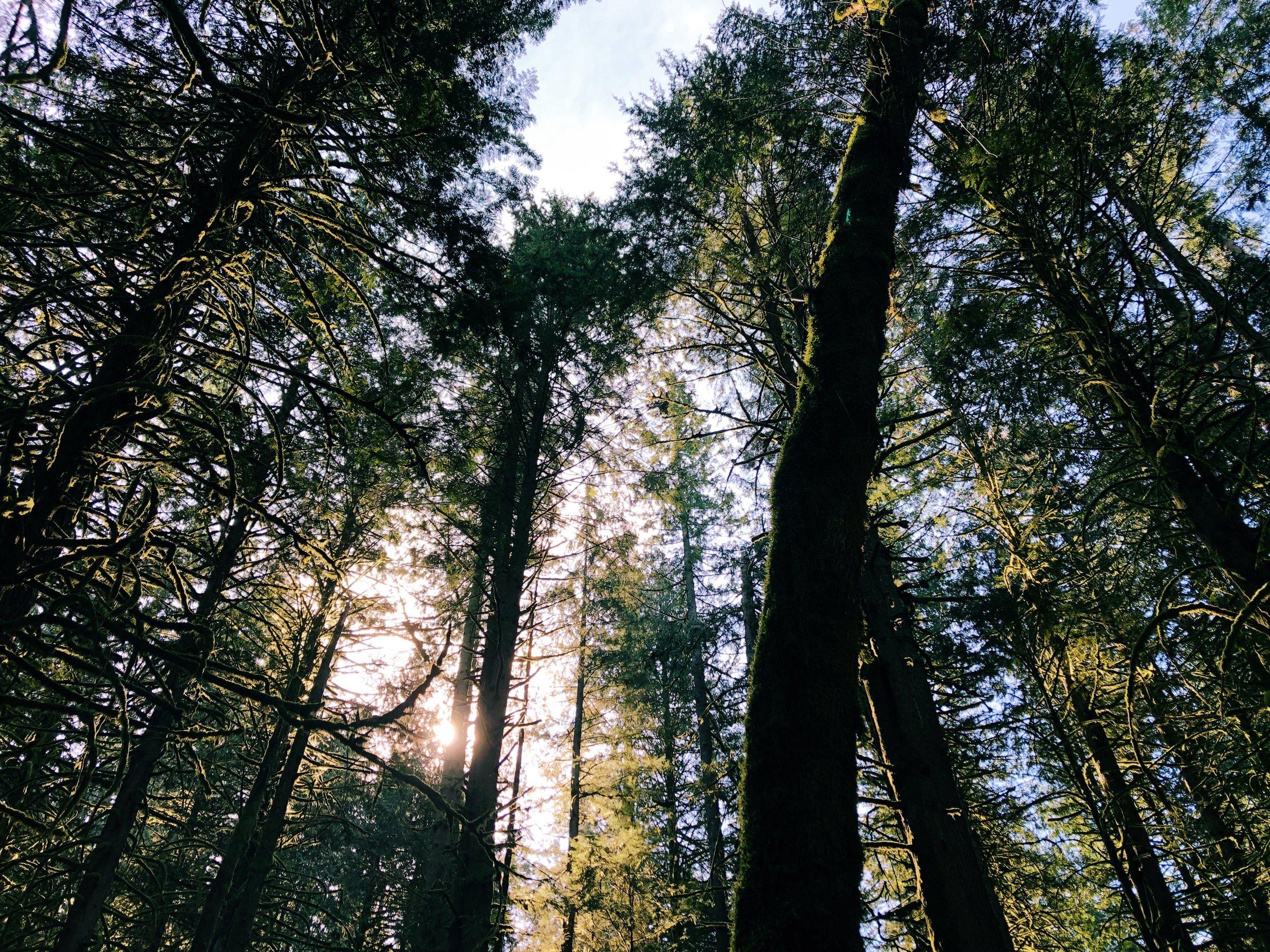 Chilliwack Community Forest_6.jpg