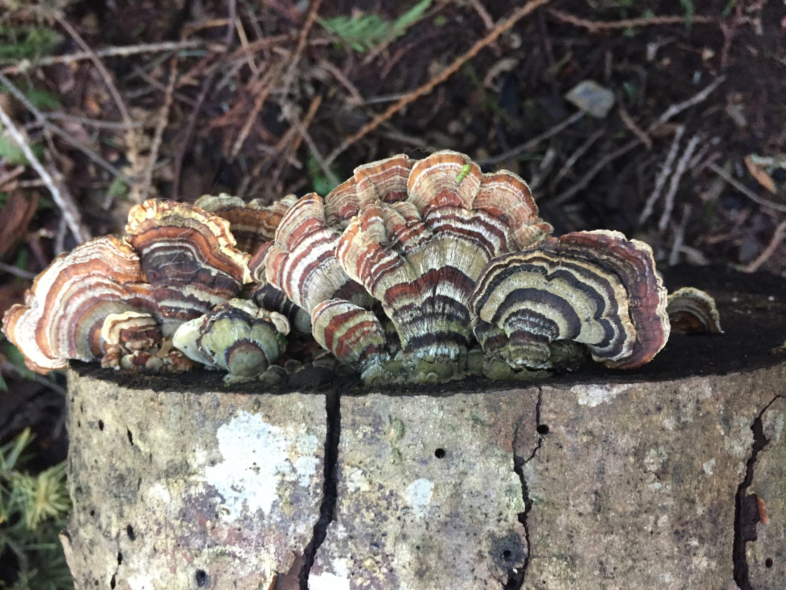 Chilliwack Community Forest_9.JPG