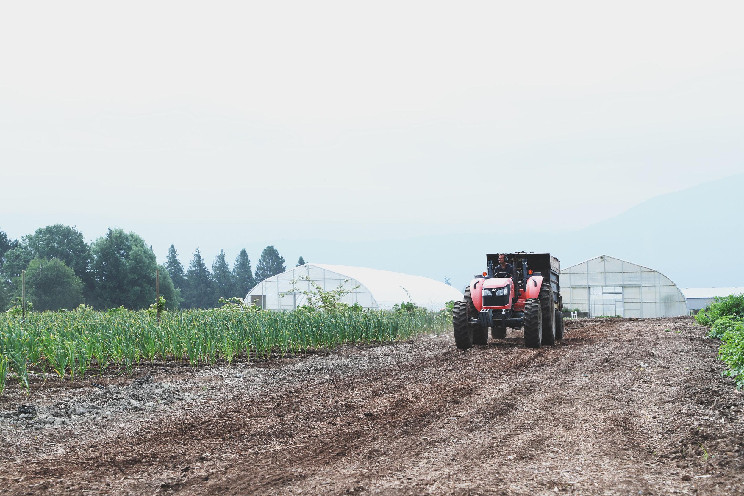 Local-Harvest-11.jpg