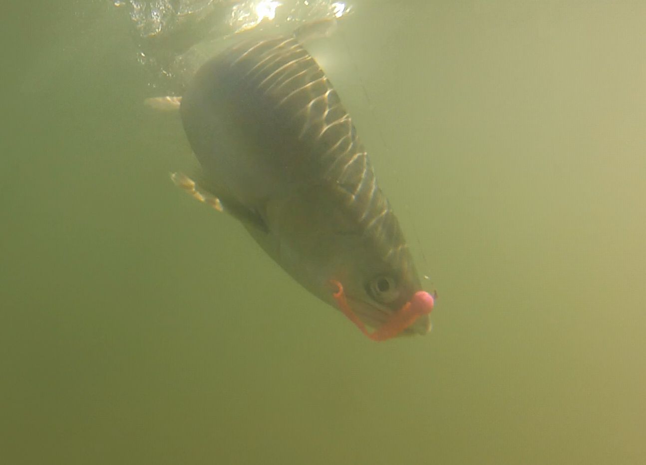 Bent Rods Pink Salmon Kit In Action.png