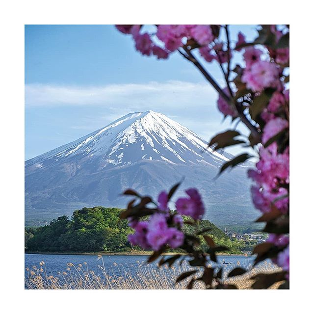 It's virtually impossible to find an unattractive angle of Mount Fuji. When we spent our day touring the surrounding five lakes, one of our favourite vantage points was from near the Kawaguchiko Natural Living Center. Don't miss your chance to enjoy the coffee here – it goes pretty well with the scenery! .⁣ .⁣ .⁣ .⁣ .⁣ #megalopolist #fujifivelakes #suitcasetravels #freshairclub #igersjapan #postcardplaces #discoverjapan #folkscenery #passionpassport #mytinyatlas #fujifivelakes #japanfocus #peoplewhoadventure #folktravel #roamtheplanet #modernoutdoors #thediscoverer #mtfuji #lifewelltravelled #simplyadventure #neverstopexploring #naturephoto #meettheworld #photography_lovers #photographytravel #photographylife #traveldeeper #naturephoto #landscape_captures #allnatureshots