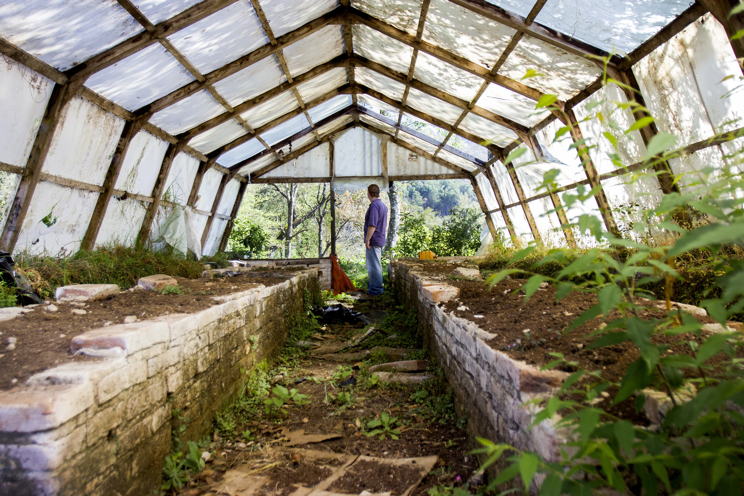 Virgil Edwards looks out over his land in San Cristobal de las Casas, Chiapas, Mexico, from an unused greenhouse. The greenhouse used to grow roses and chrysanthemum, until late 2012 when more than 500 people invaded his land for two months.