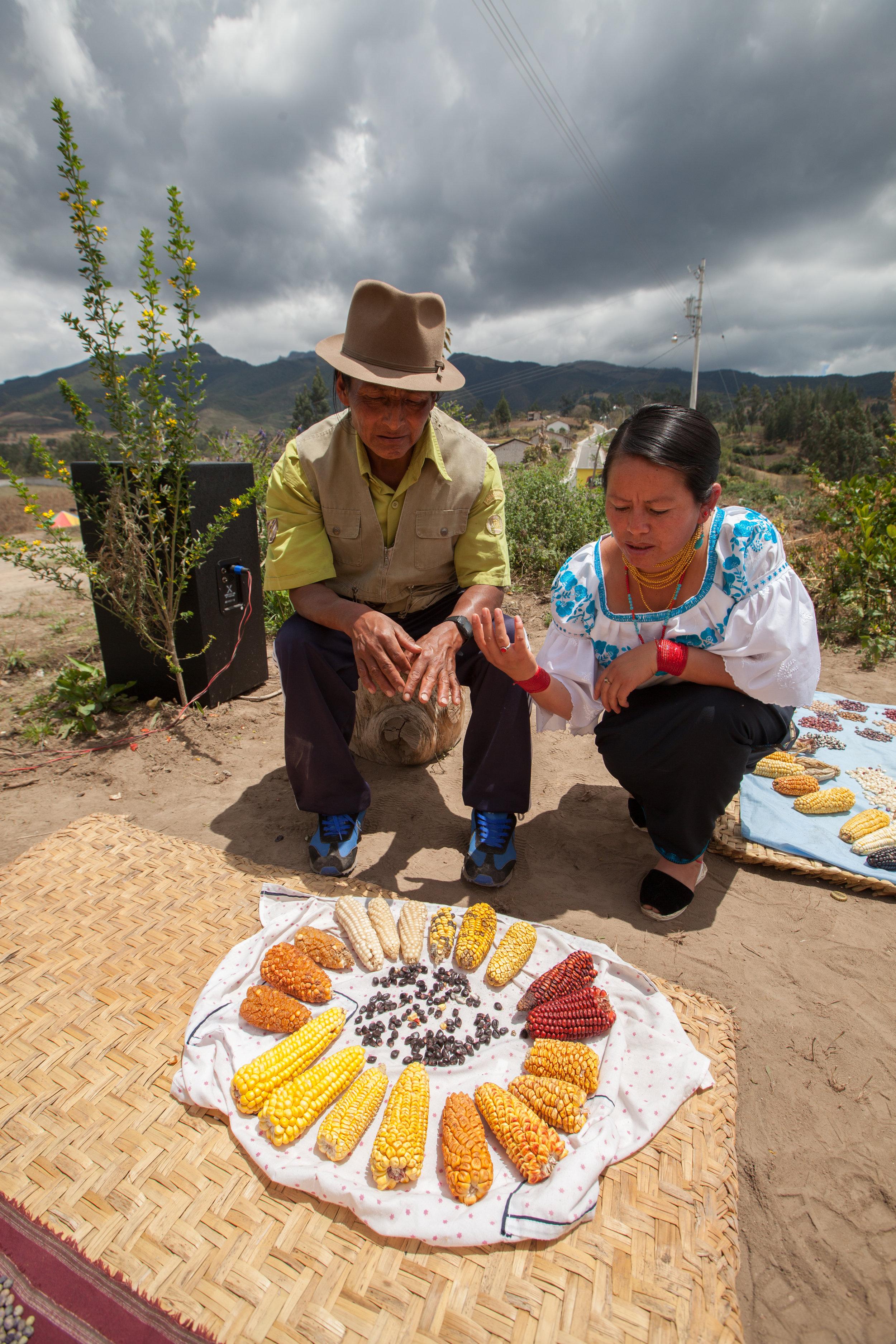 """Manuel Burga Espinoza. Mojandita, Otavalo, Ecuador.  """"Maiz es lo que nos da vida, porque nos ayuda alimentar a nuestra hijos. Tenemos que guardar muy bien la semilla.  Si a los jóvenes no enseña los papas a valorizar las semillas, se pierde. Las personas quienes están encargados en enseñar los hijos a amar la naturaleza, de sembrar, y que ellos empiezan a querer, a enamorarse de lo que es la siembra."""""""