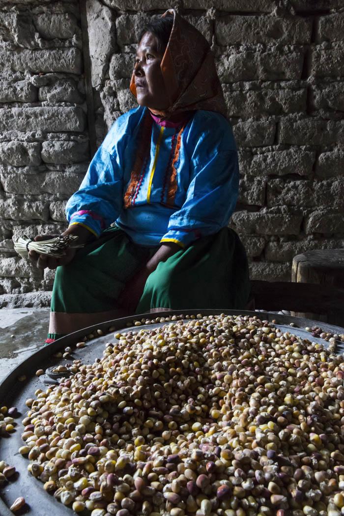 """""""Todo está conectado con el todo,¿no? Entonces el maíz también está conectado con el todo. Es como decir que el maíz es una familia y nosotros somos otra familia, pero, igual, el maíz y nosotros somos una sola familia. Entendido de esa manera, toda la naturaleza somos de la misma familia, y cada uno que existe en la naturaleza tiene su valor. Hay que comprender esa realidad. Somos de una cultura diferente, pero la vida es una sola cosa. Donde vaya uno, la gente tiene su propia forma, su propio ritmo, su propia manera. Creo que eso es lo que tenemos que comprender: que hay diferentes formas de vida.""""  -Luis Pérez, Comunidad de Repechique, Chihuahua, México."""