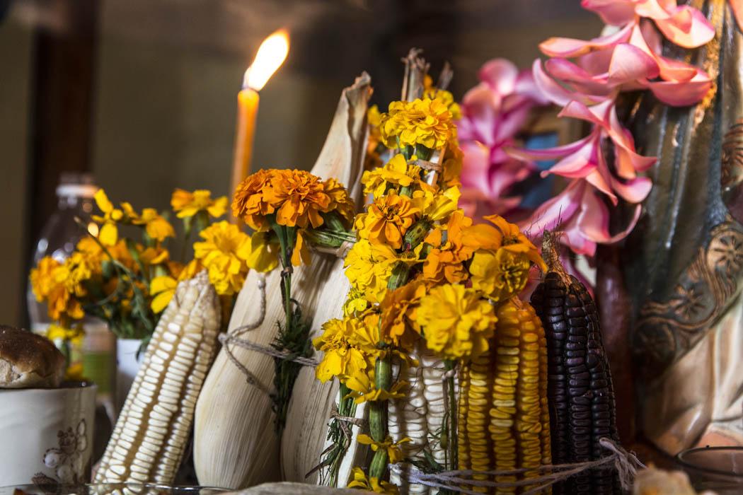 Parte de la ofrenda de María Antonia con diferentes clases y colores de maíz, el sempasuchitl y otras flores.