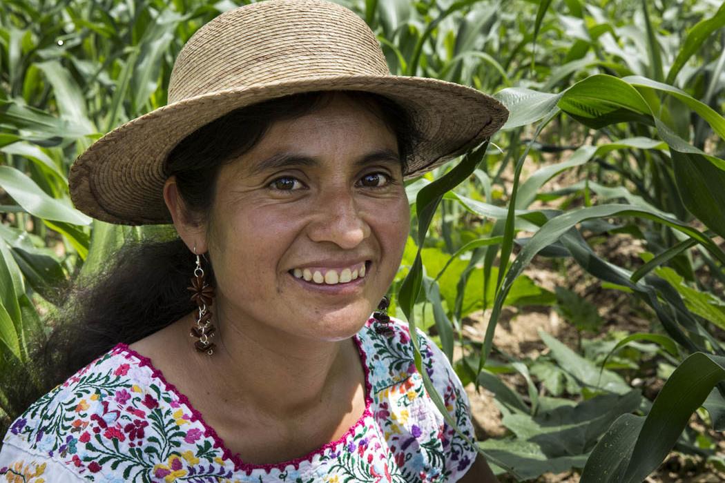 La gente de El Porvenir, Oaxaca sigue cultivando su maíz con conciencia. La rebosante milpa de Josefina refleja todos los cuidados que ella le ha dado.