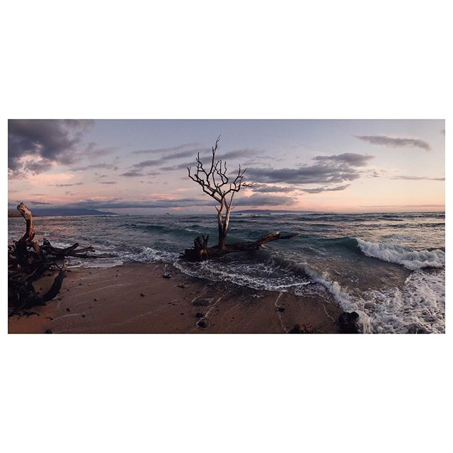 Beauty from ash. (Will likely post a few more of this guy. Simply stunning.) #tree #stunning #sky #sunset #cottoncandy #deadtree #undead #maui #hawaii #igers #ig #photography #nature #naturephotography #travelphotography #travel #roots #driftwood #beauty