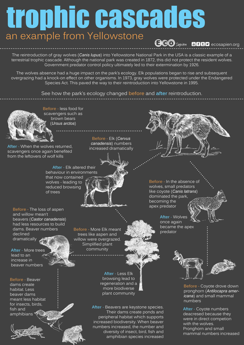 (c) EcoSapien. More great infographics can be found here: http://www.ecosapien.org/infographics.