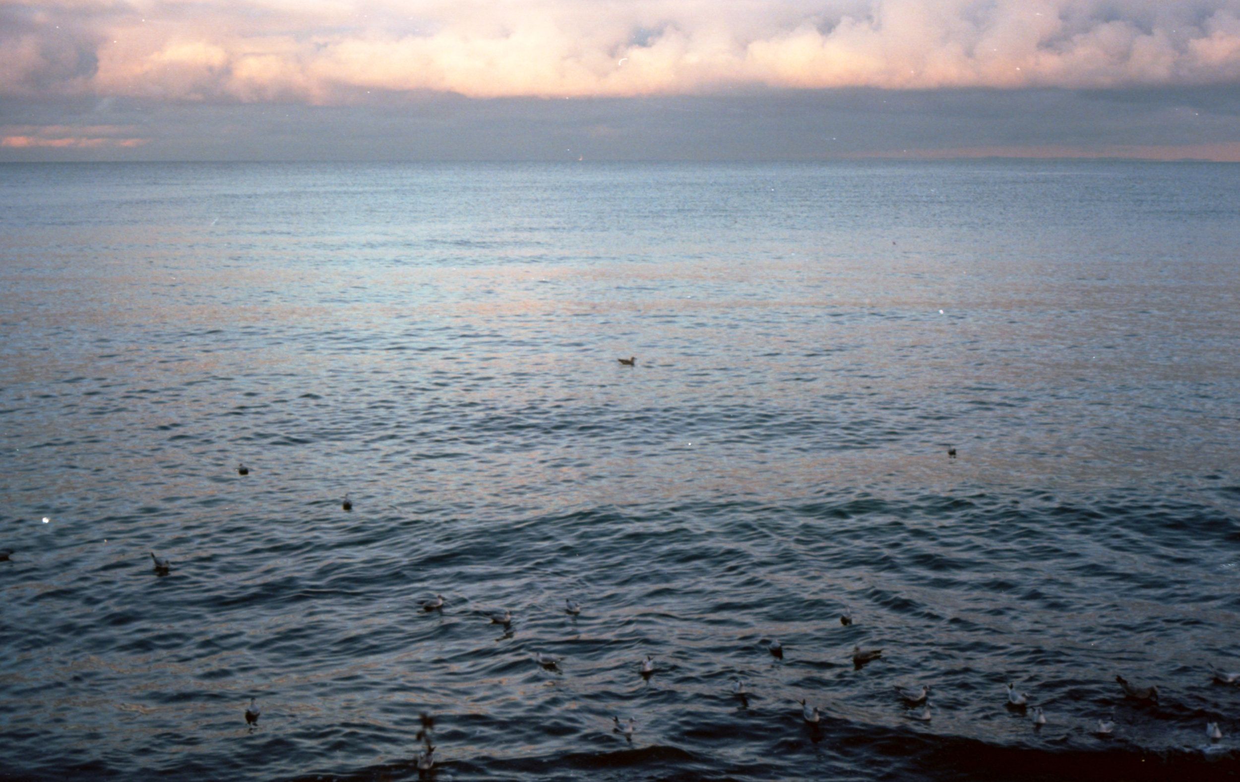 Winter seascape #3 on 35mm