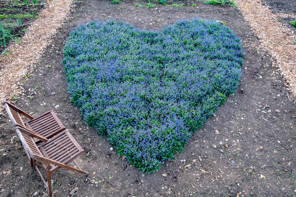 Landart Projekt   ,  Mai 2018  Das Herz bestand aus 255 Vergissmeinnichtblumen und war im Mai und Juni 2018 in Poing bei München zu sehen.