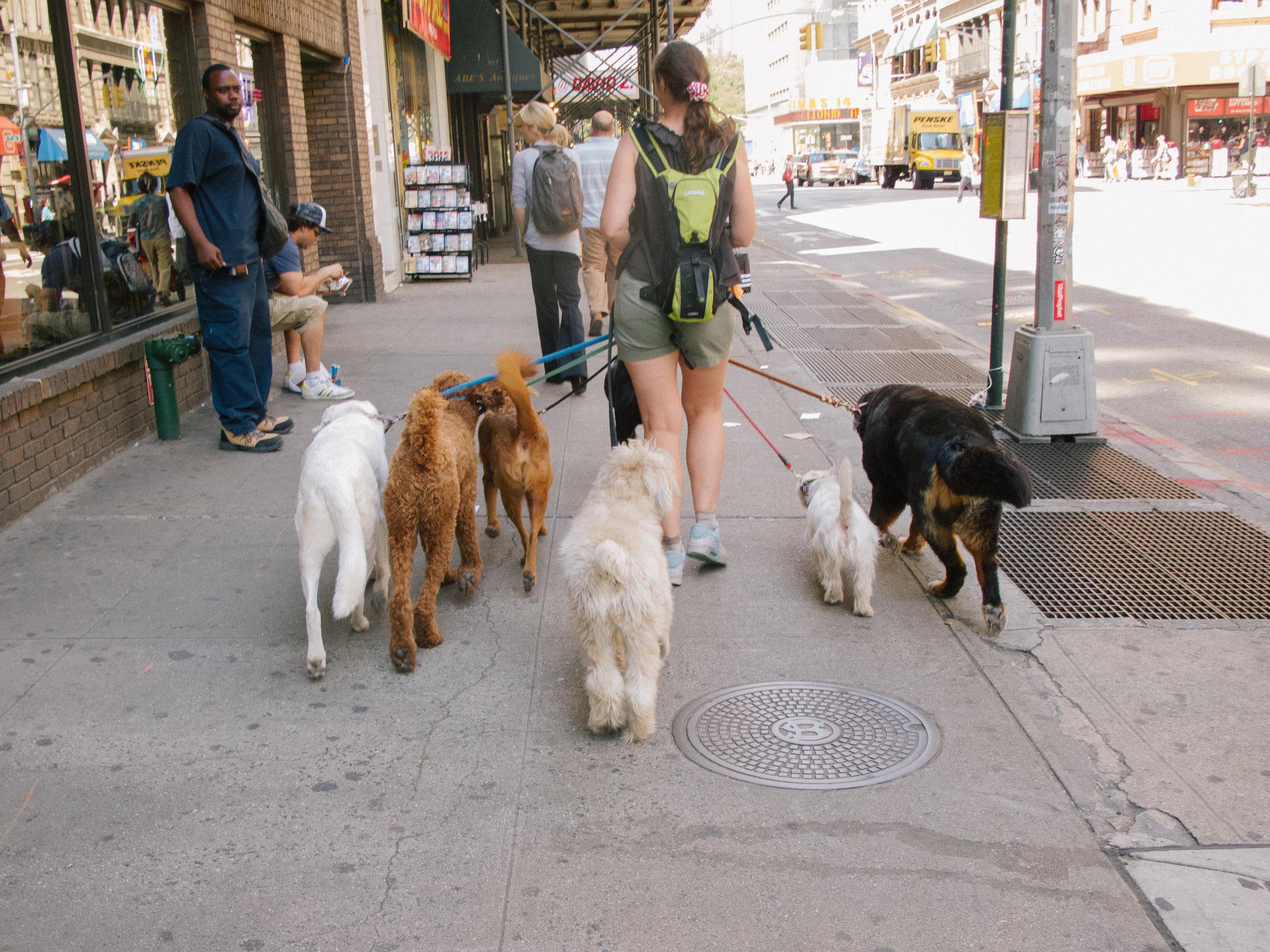 dogs_IMG_0841_100608_.jpg