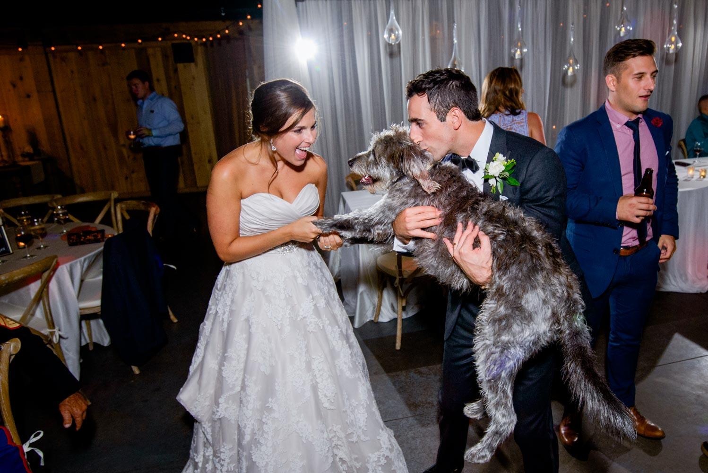 Greg & Jess Photography - Nashville Wedding & Engagement Photographer - Dogs