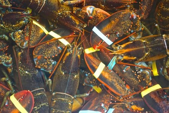 Robinson's Wharf - Lobster.jpg
