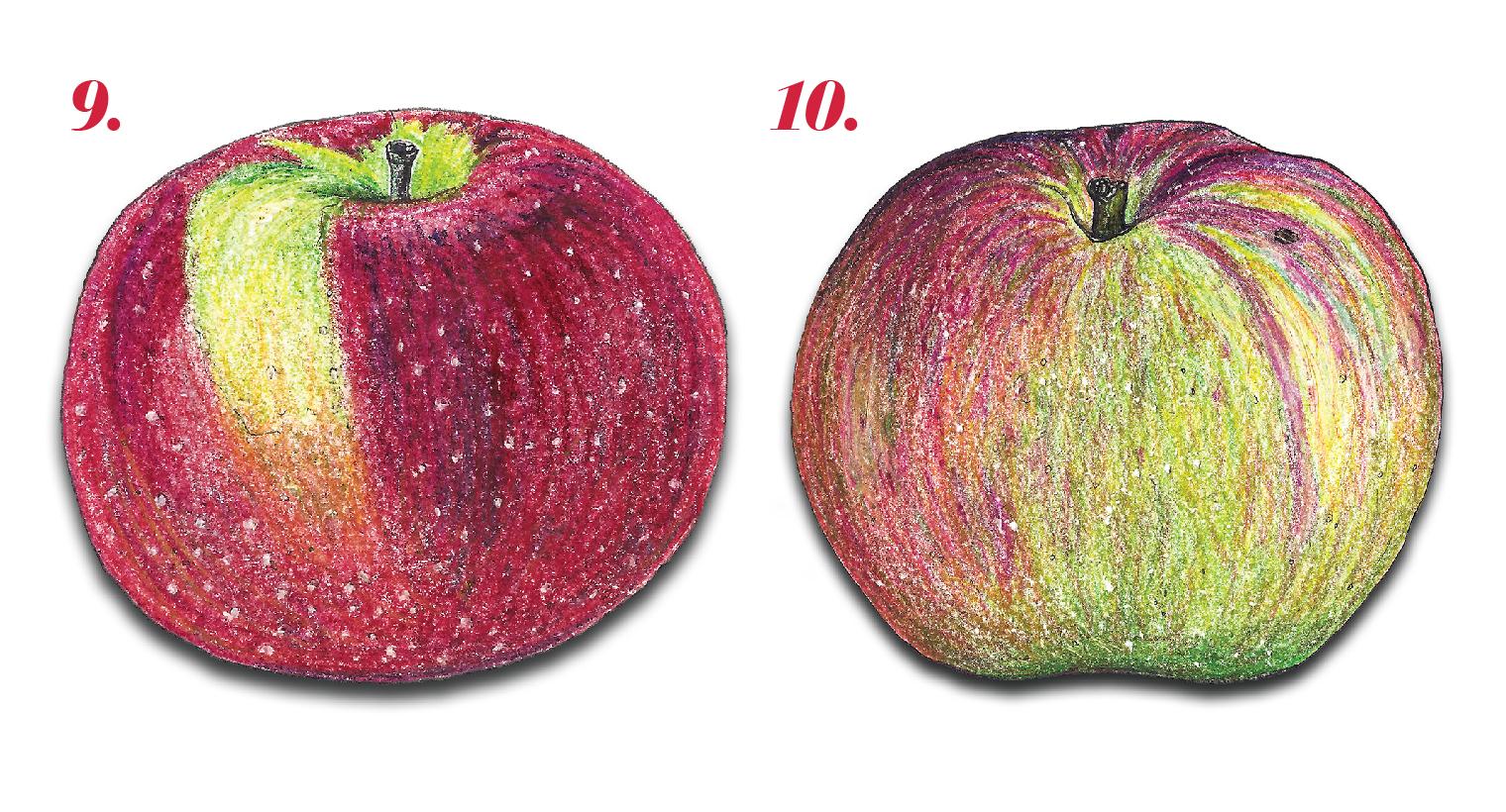 ApplePrimer-05.jpg