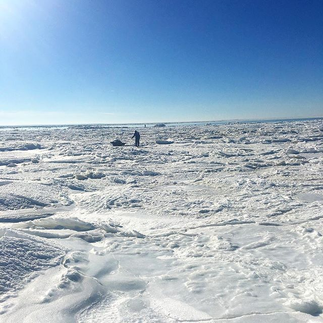 Things are starting thaw but this cold winter has made for some tough work for our oyster farmers. 📷by @islandcreekoysters #thankyouroysterfarmer #eatoystera #newenglandaquaculture