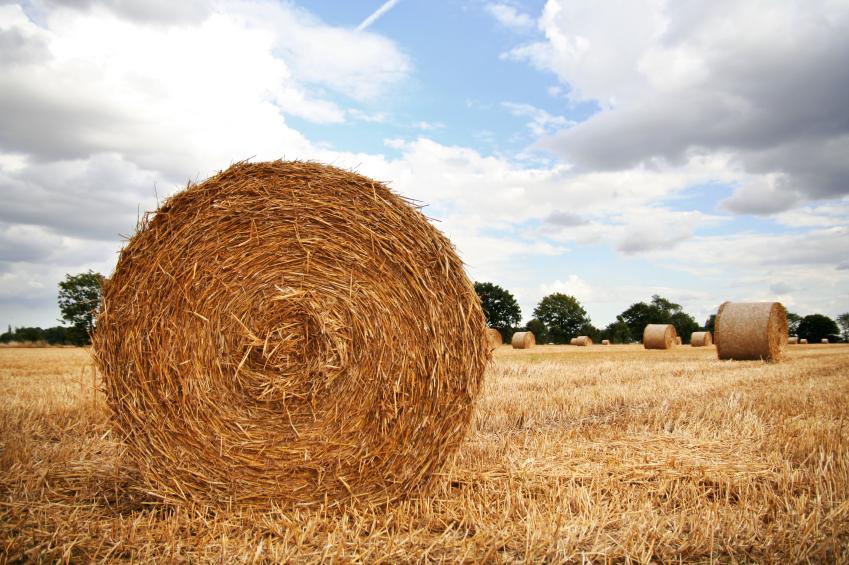 harvest-roll.jpg