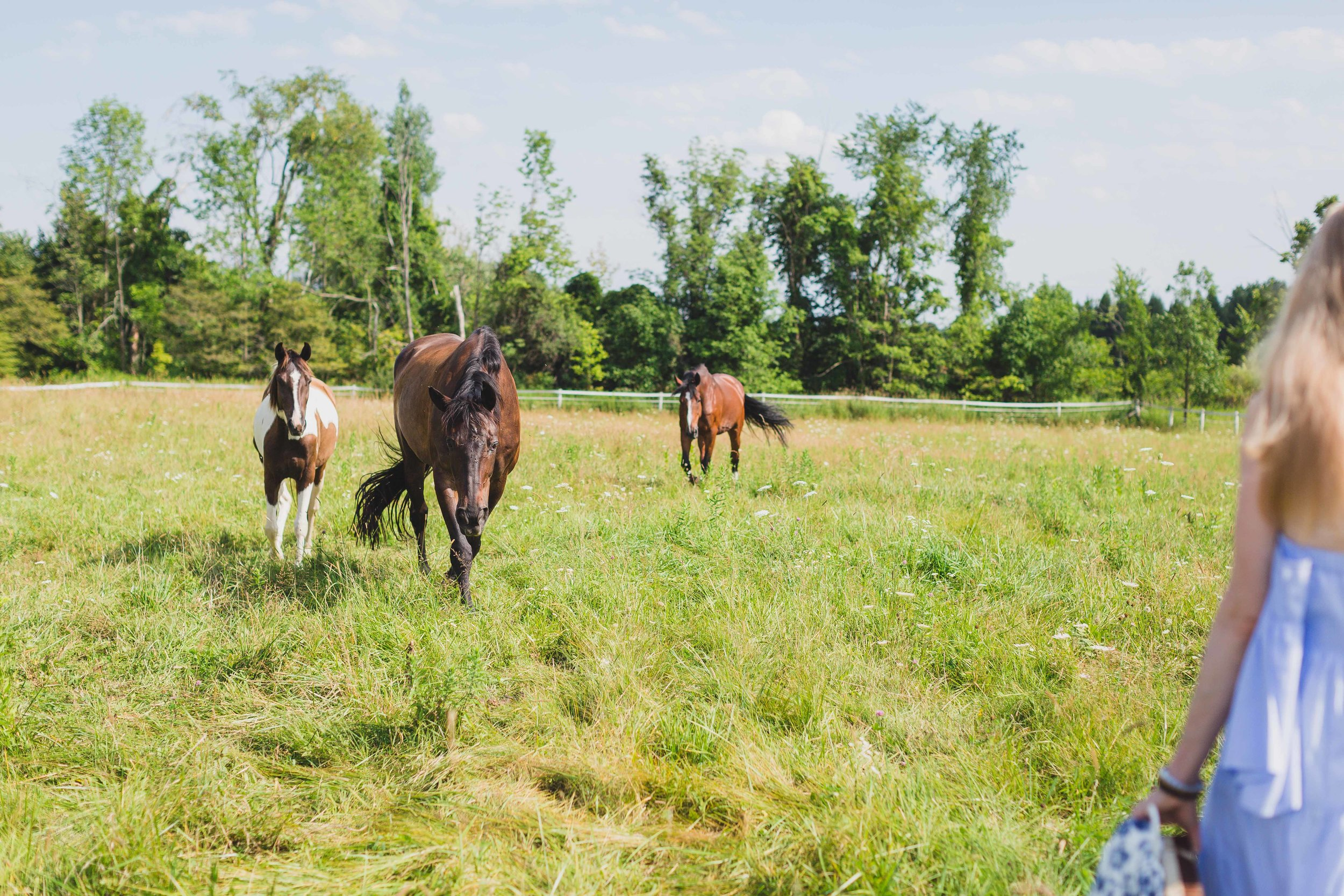 The healing with horses herd coming in for a session.