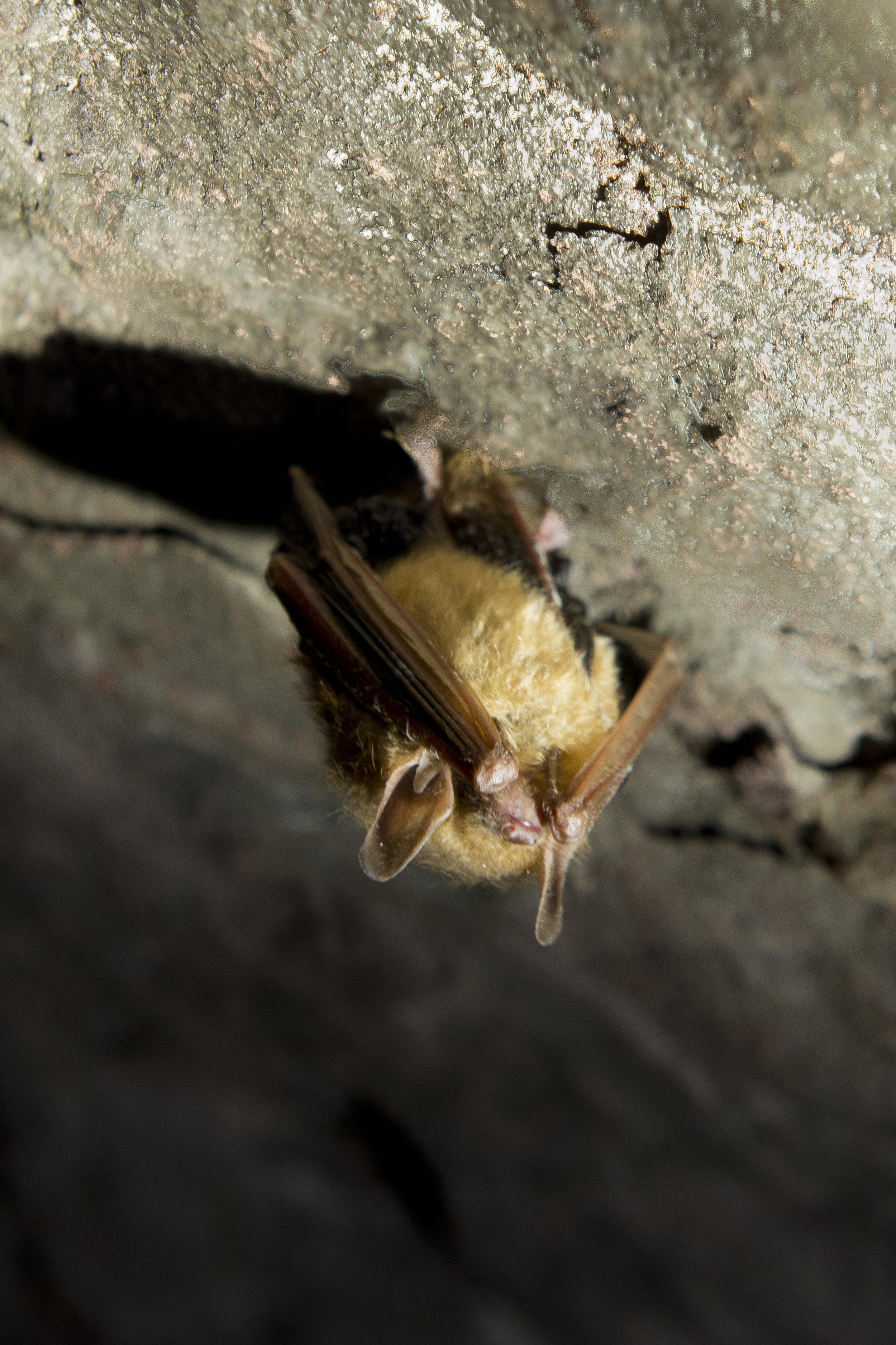 Ruffner Mine #3 Bats 05012017