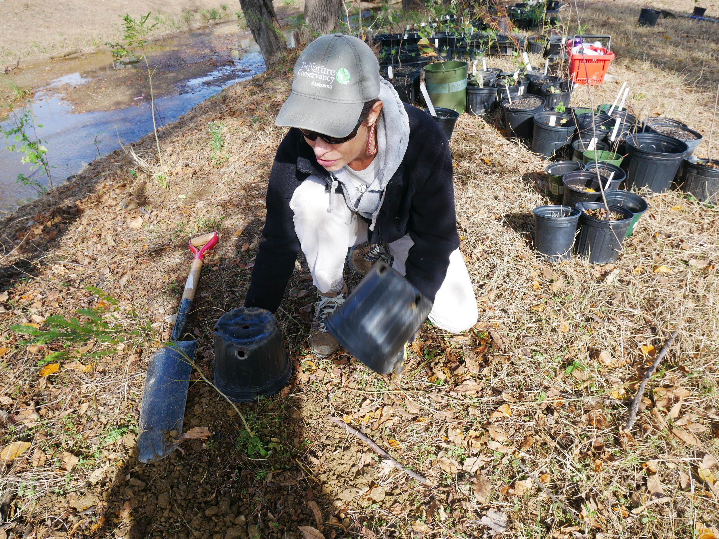Shades Creek Restoration III.JPG