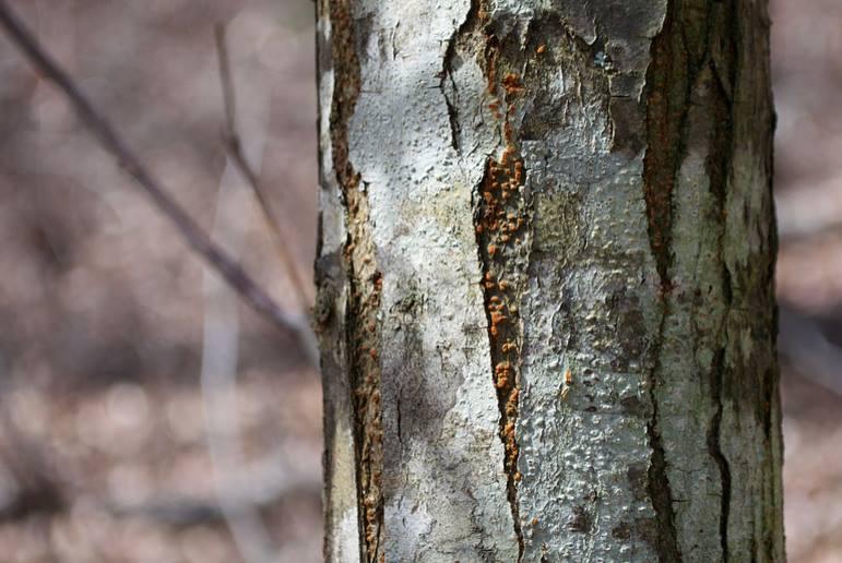 Chestnut Survey II.jpg