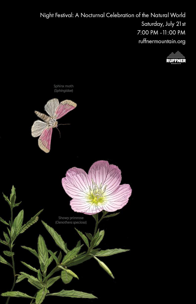 Poster Primrose (1).png
