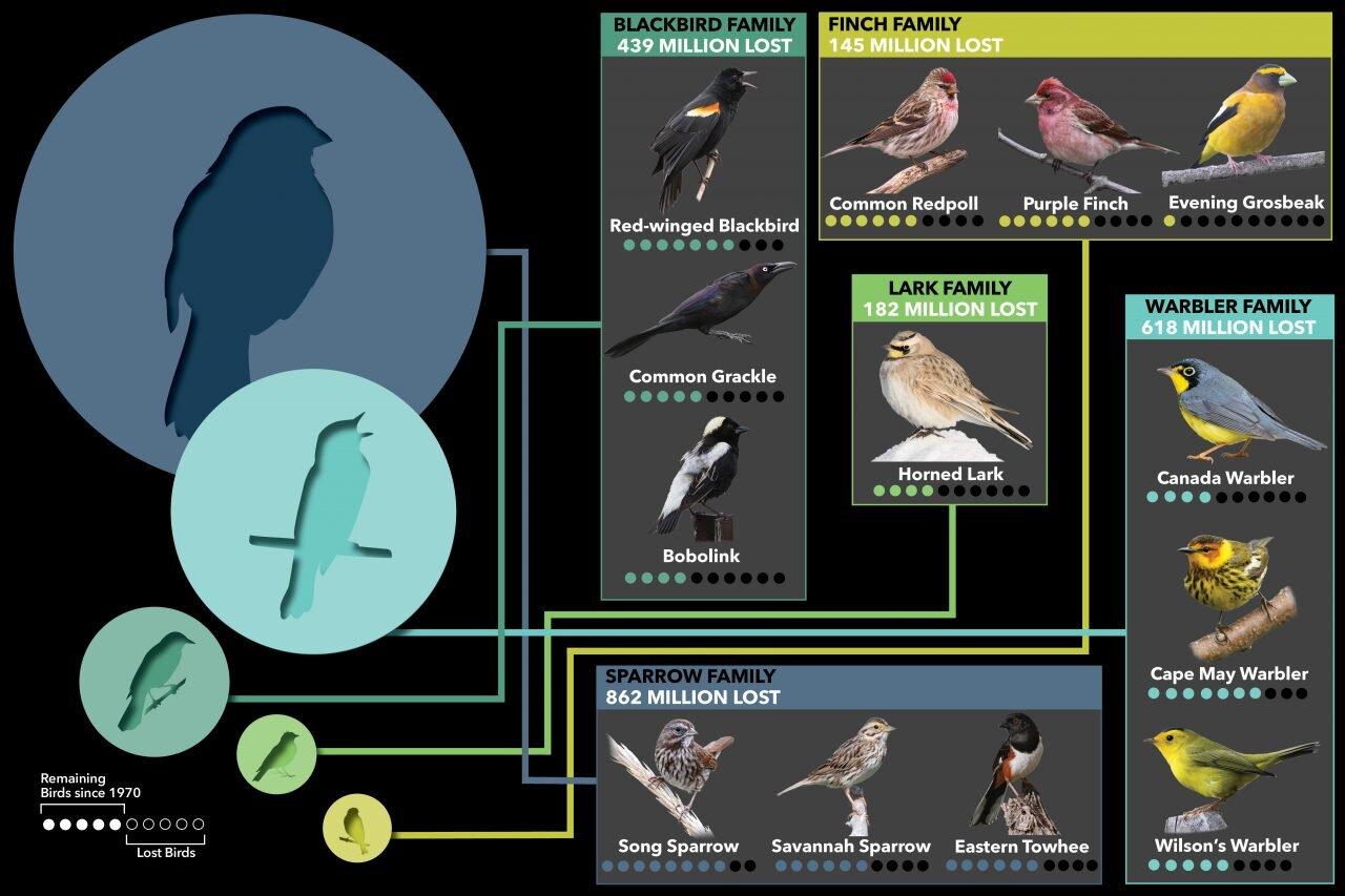 BirdFamilyLosses-1280x853.jpg