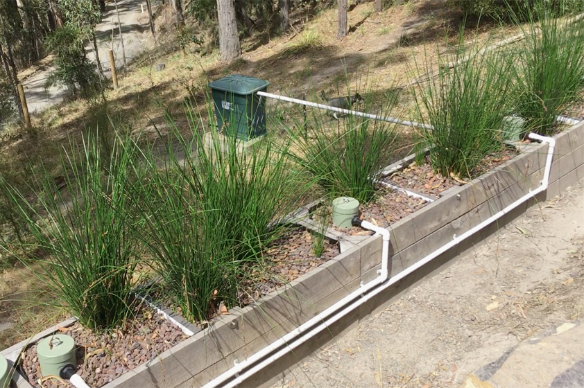 Reed Bed in the Yarra Valley, VIC 6 Months Later…! Designed and Installed by Zenplumb.