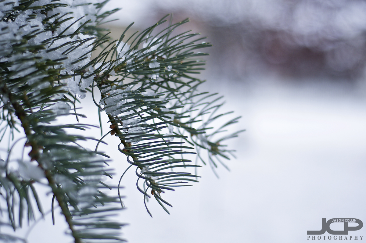 My first time to see snow in at least 8 years - Nikon D300 with Nikkor 50mm @ f/2 ISO 200 1/400th