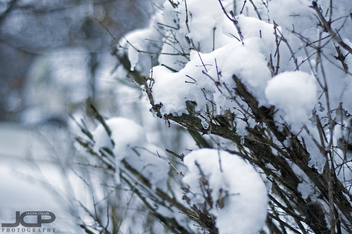 Leaveless bushes and trees might welcome the snow so they turn beautiful again - Nikon D300 with Nikkor 50mm @ f/2 ISO 200 1/400th