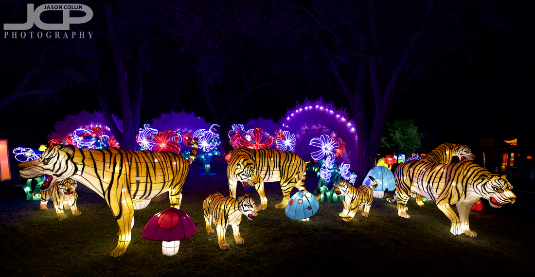 All the animals of the Chinese calendar are present at the Lantern Festival - Nikon D750 with Tamron 15-30m @ f/4 1/60th ISO 800