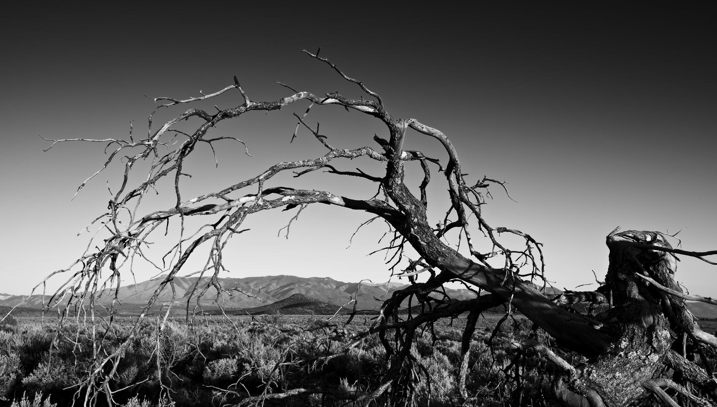 Fallen Tree Mountain Frame