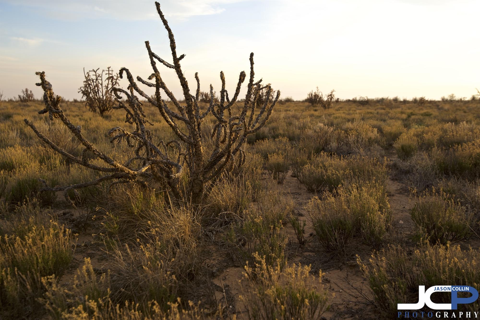 SNNM-2244-rio-rancho-89228.jpg