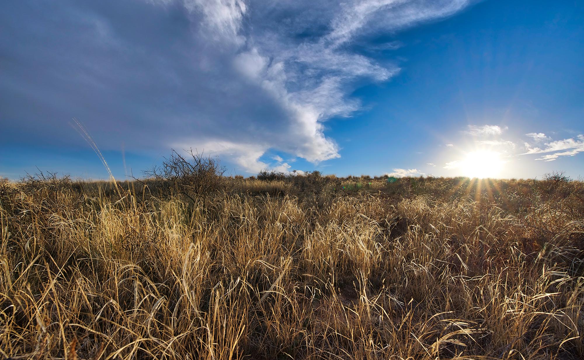 Golden Grass Hill Torrance County 02