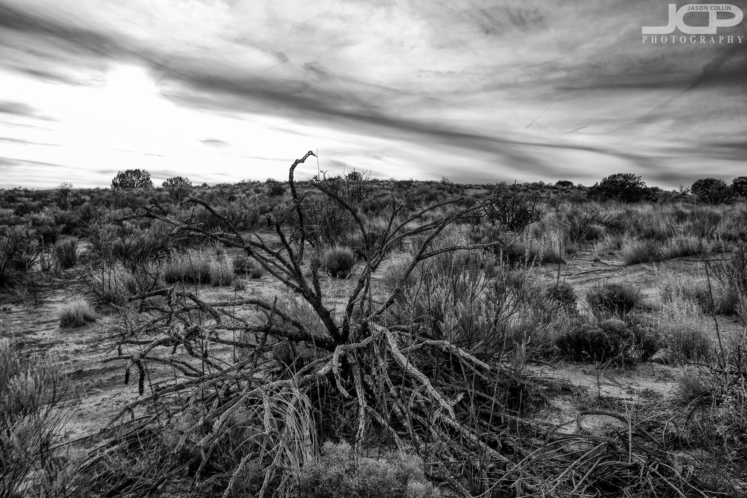 The desert is harsh, black & white is harsh