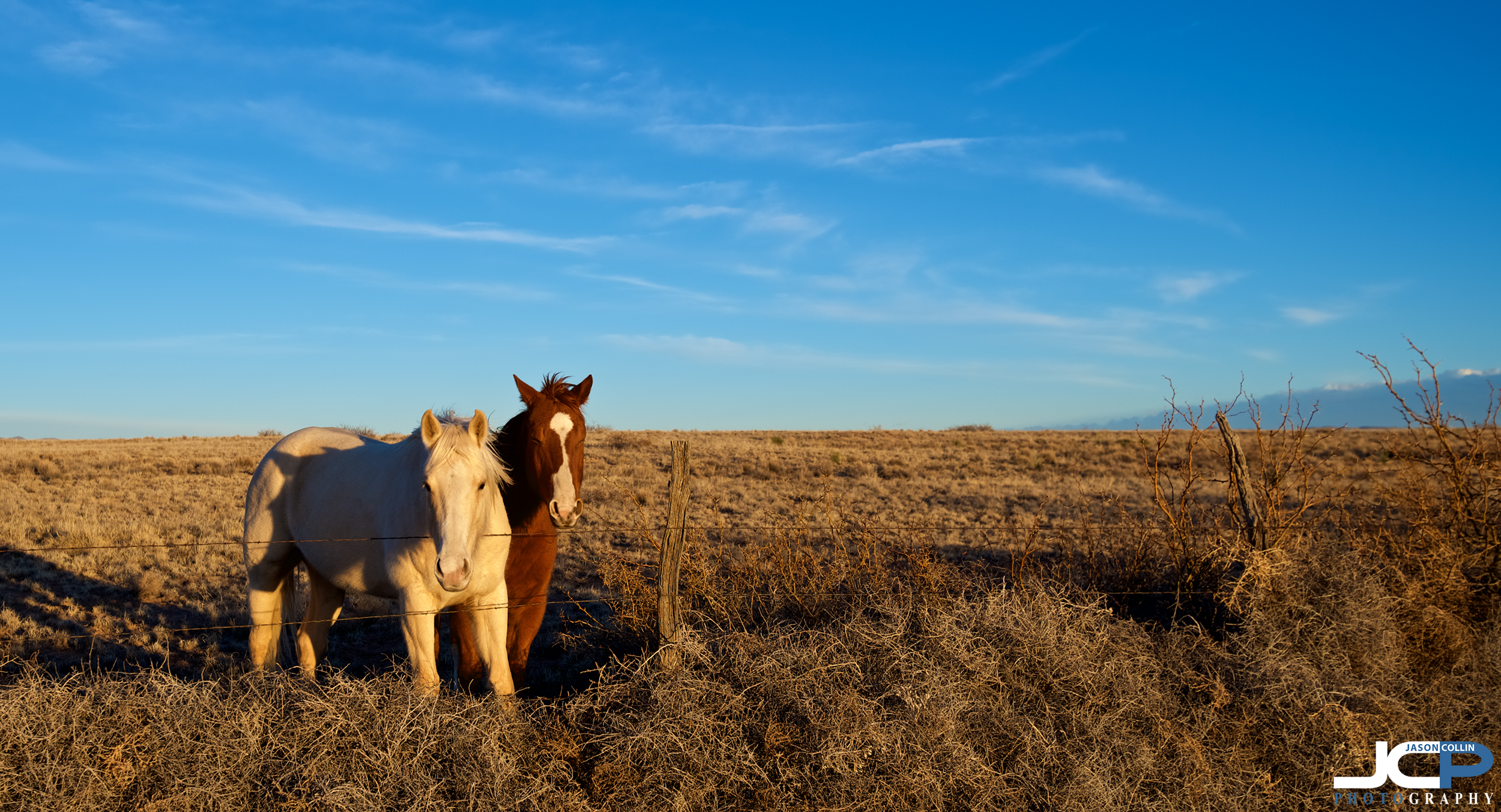 Friendly horses in Belen, New Mexico