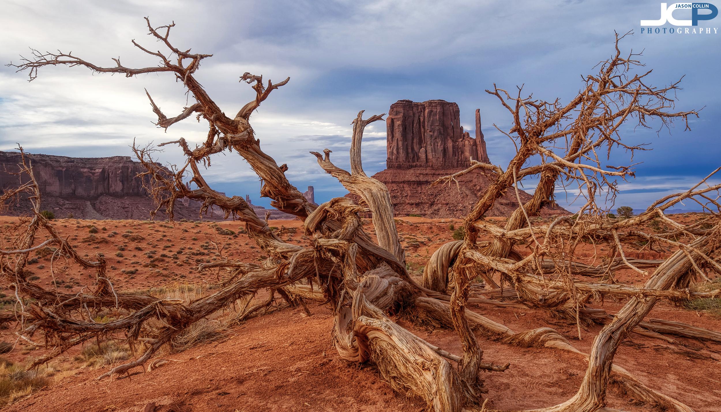 twisted tree monument valley Utah