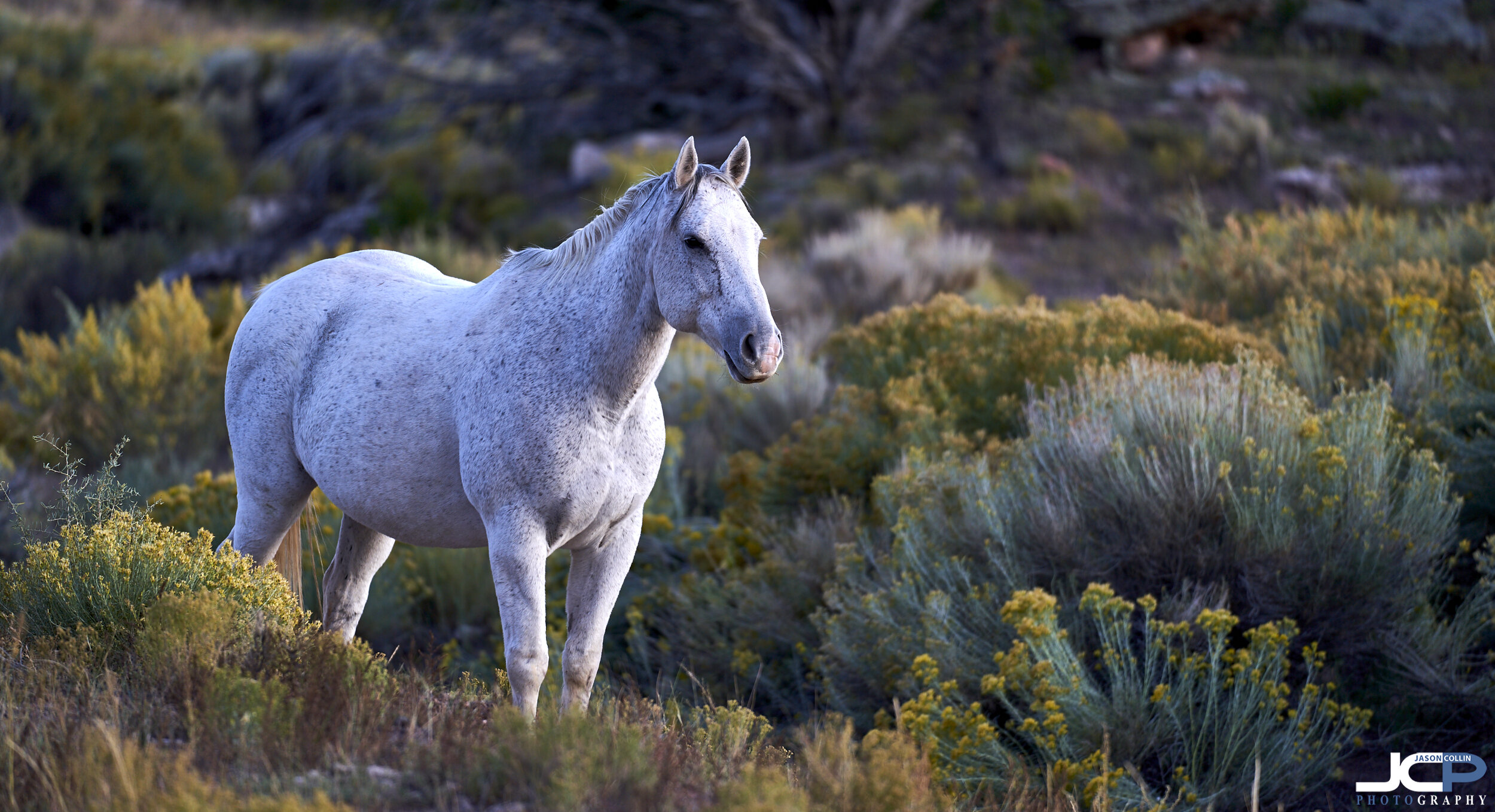 Pale horse in dusk light in New Mexico