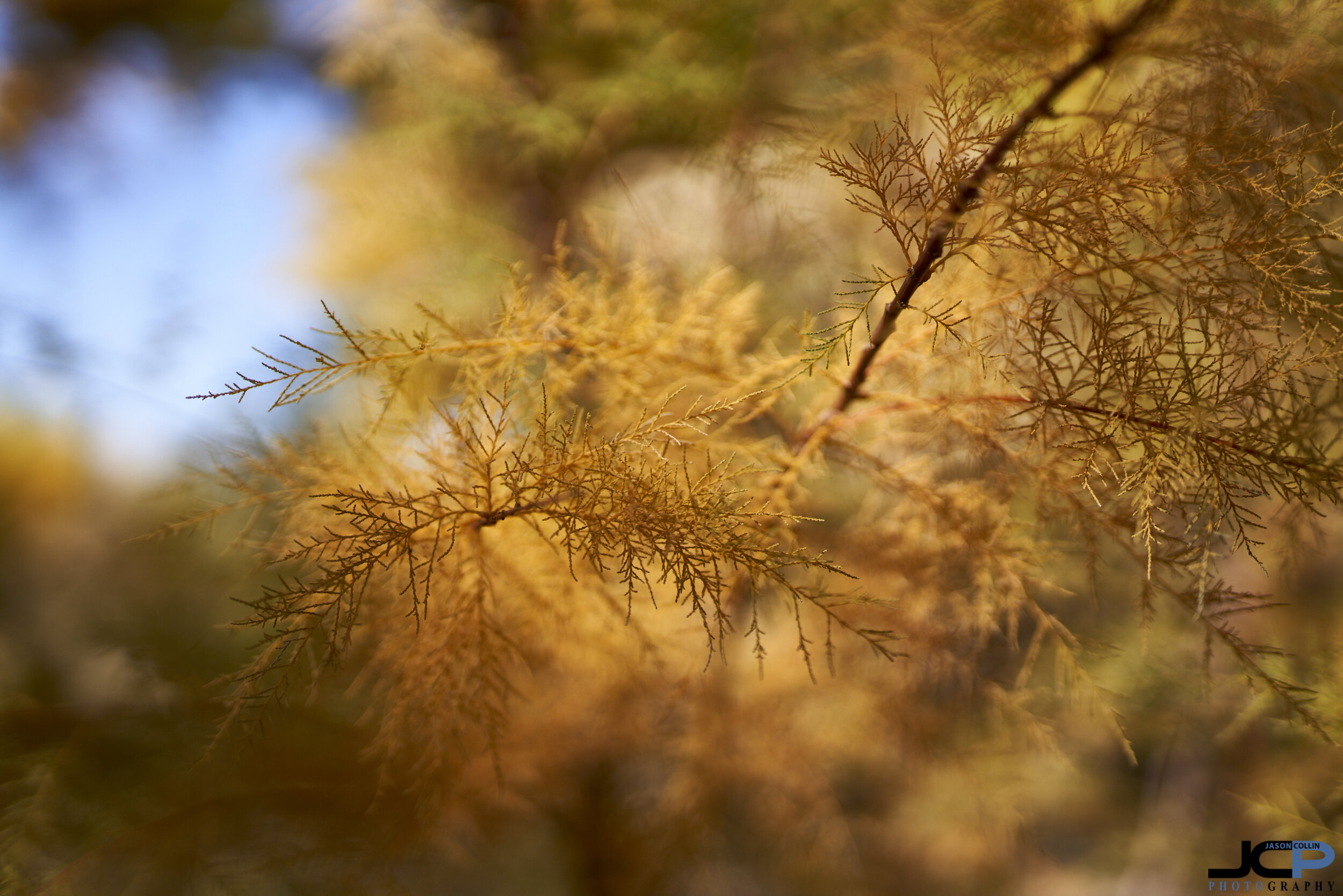 Shallow depth of field can create a different world of color and focus in autumn