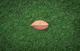 artifical grass wythall.jpg
