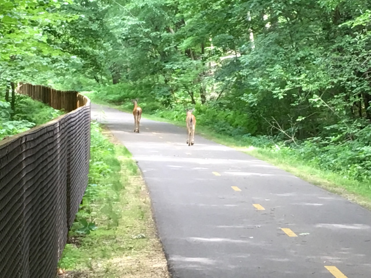 These two youngsters were doing their best to figure out the meaning of the yellow line on Brown's Creek State Trail. Shortly after I took this pic they jumped the fence and headed for the woods. Some folks just aren't meant for pavement. I completely understand . . .