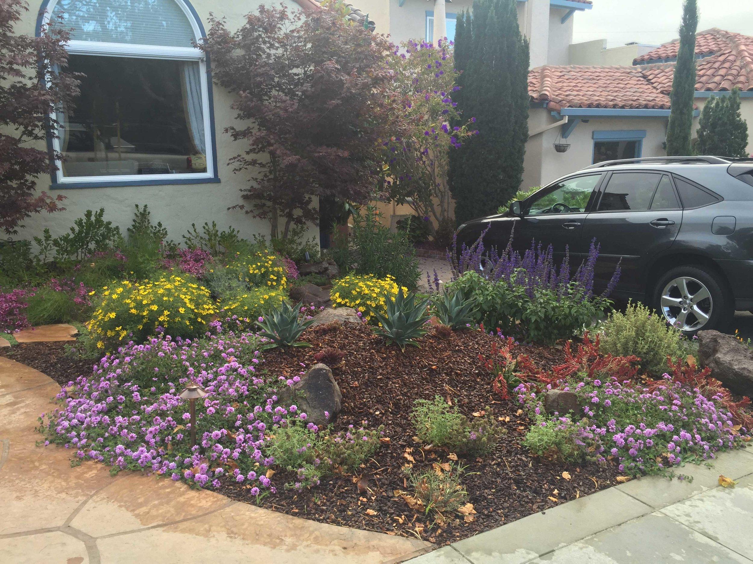 Drought Tolerant Front Garden Landscape